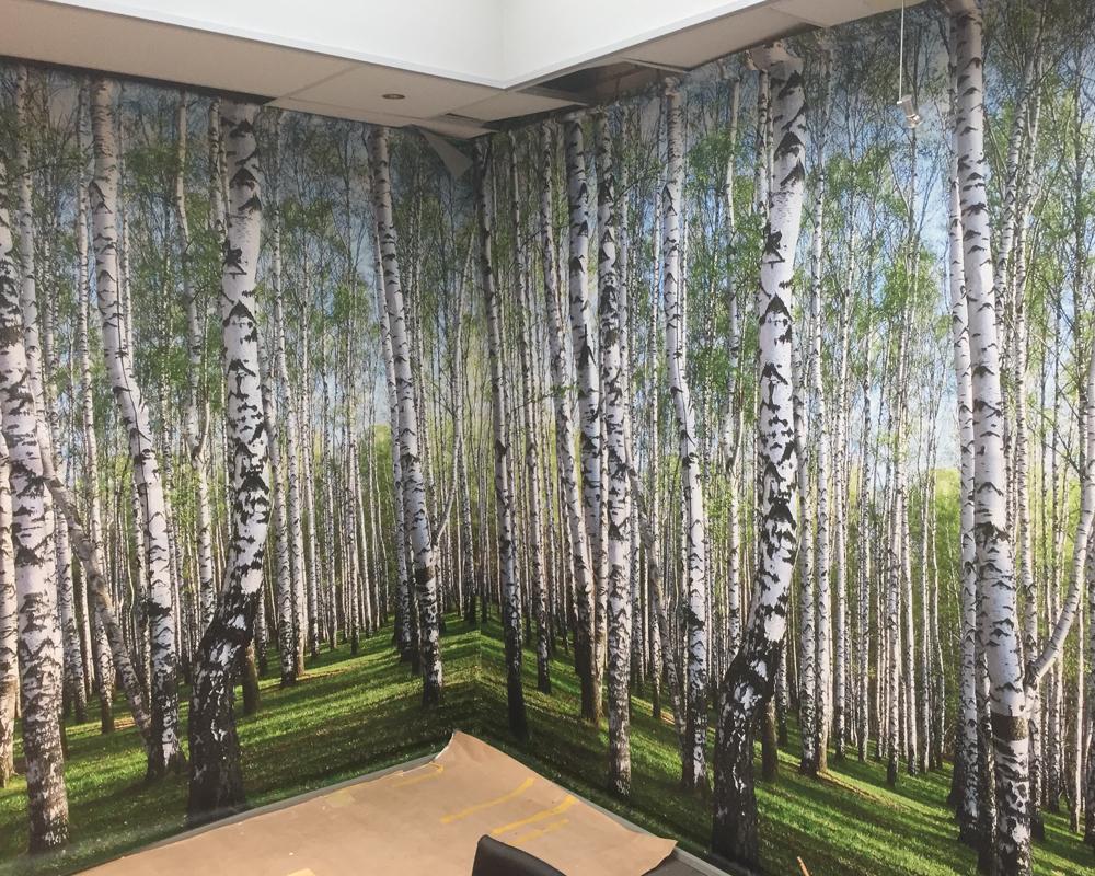 Fotodoek berkenbomen in wachtruimte - Schildersbedrijf J. van Dijk Zn. B.V. Veenendaal